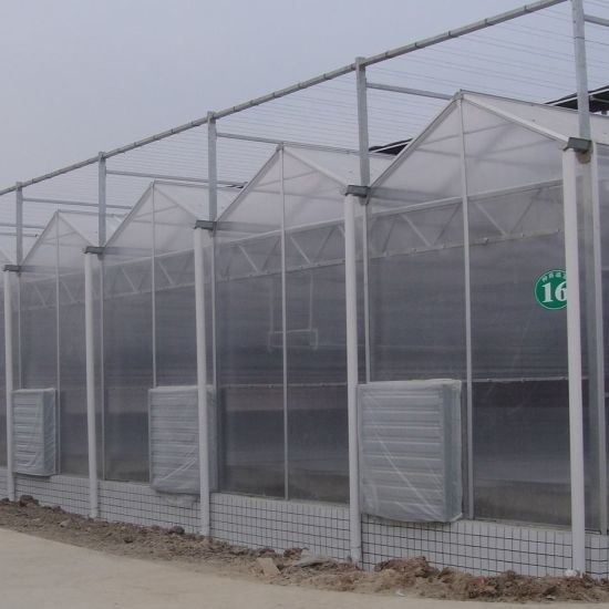 PC Sheet Multi-Span Polycarbonate Greenhouse