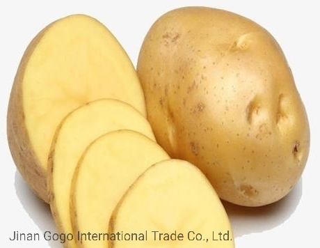 Big Potato/High in Starch/Fresh Potato (80-150g) pictures & photos