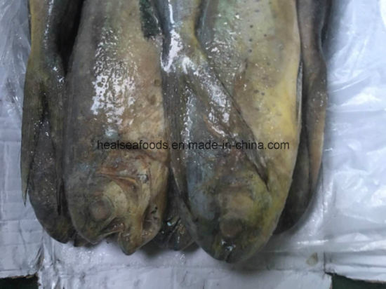 Seafrozen Seafood Mahi Mahi Wholesale Price pictures & photos
