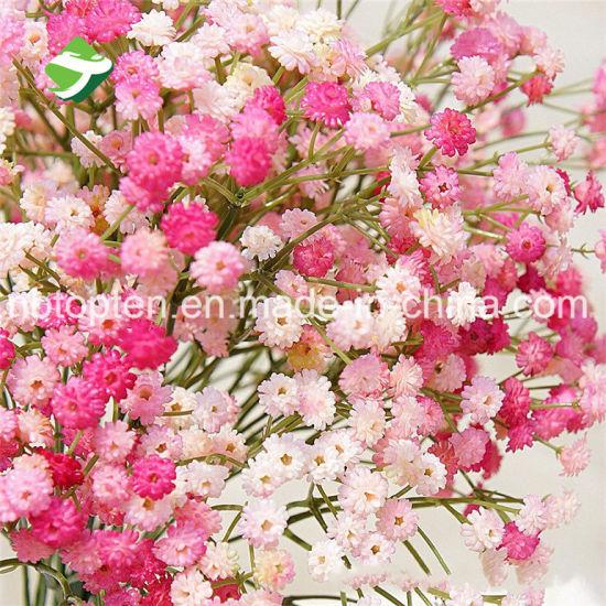 China wholesale colorized diy babysbreath artificial flowers china wholesale colorized diy babysbreath artificial flowers mightylinksfo