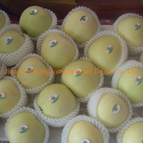 Green Color of Golden Apple Which Is for Southeast Asian Market pictures & photos