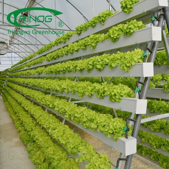A frame vertical farming companies greenhouse for lettuce