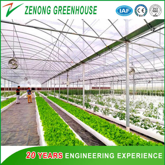 Commercial Greenhouse Poly Film Multi-Span Greenhouse for Agriculture