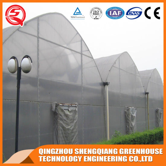 Agriculture Productive Single-Span Plastic Film Garden Greenhouse for Sale