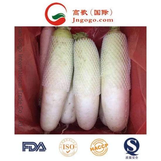 Competitive Price Fresh White Radish Supplier pictures & photos