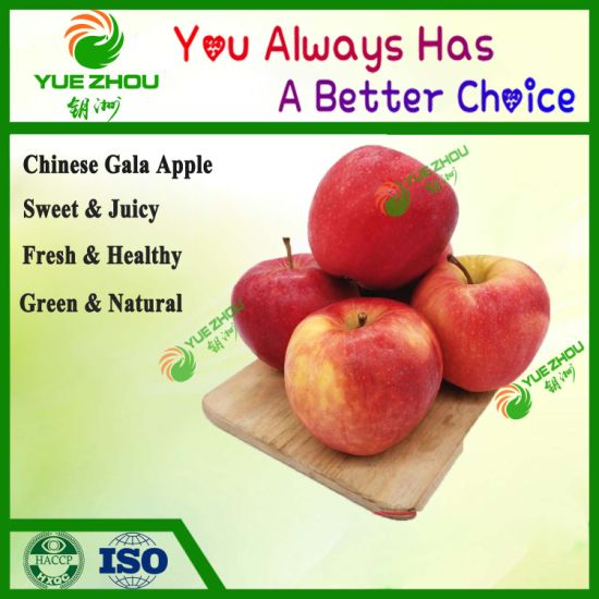 2019 New Crop Good Quality Red Fresh Gala Apple