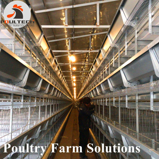 Galvanized Chicken Breeding Farm Machinery Battery Layer Cage with Automatic System pictures & photos