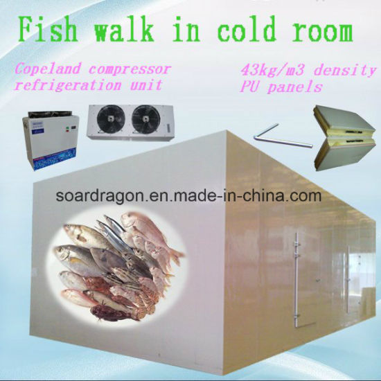 Fish Walk in Cold Room with -25 Degrees C