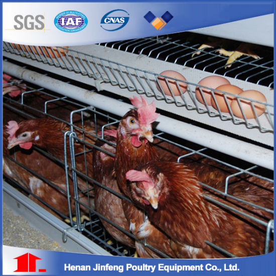 Africa Egg Chicken Cages Poultry Farm Equipment