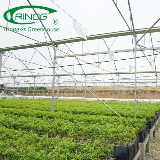 China Multispan Lean To Greenhouse Near Me For Sale China Eu Film Greenhouse Plastic Greenhouse