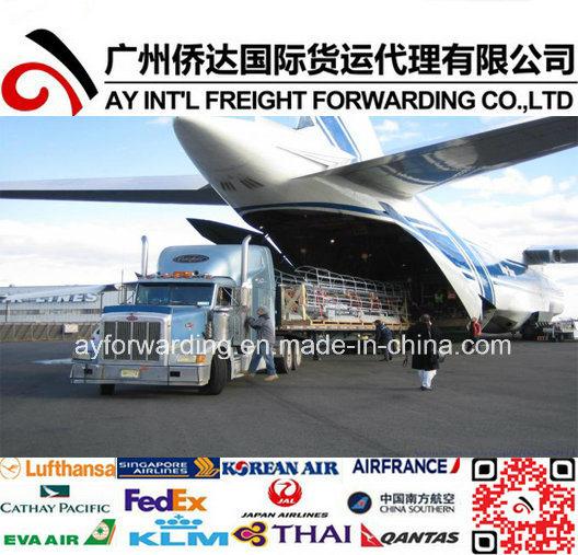 Professional Shipping Service to Saudi Arabia