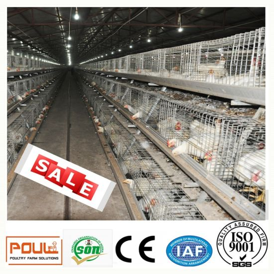 Automatic Equipments Broiler Chicken Cage pictures & photos