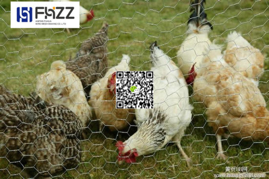Low Price Chicken Poultry Mesh Hexagonalfence Wire Netting