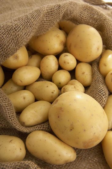 Hot Sale New Crop Fresh Potato From China