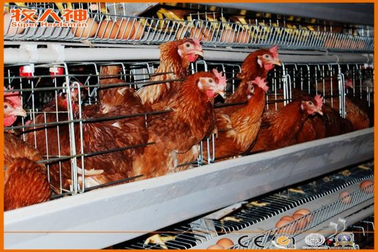 Farming Equipment for Broiler Control Shed pictures & photos