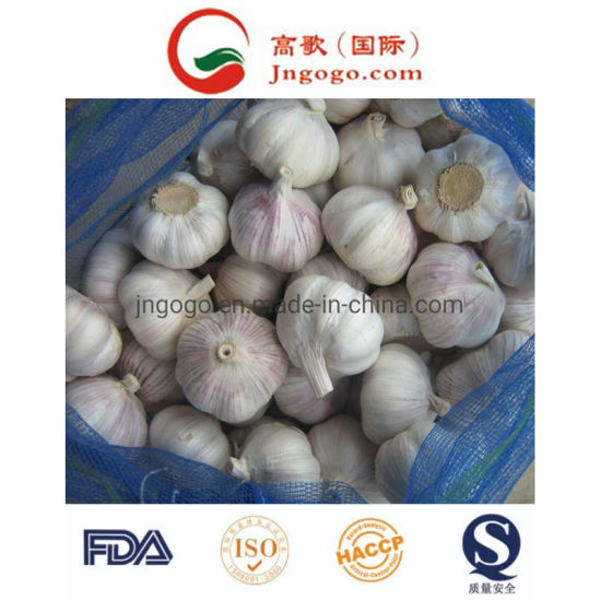 Fresh Small Bag Packing Pure White Garlic
