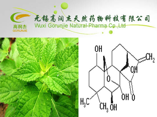 High Quality Anti-Cancer Oridonin Abdosia Rubescens Extract Powder OEM Service pictures & photos
