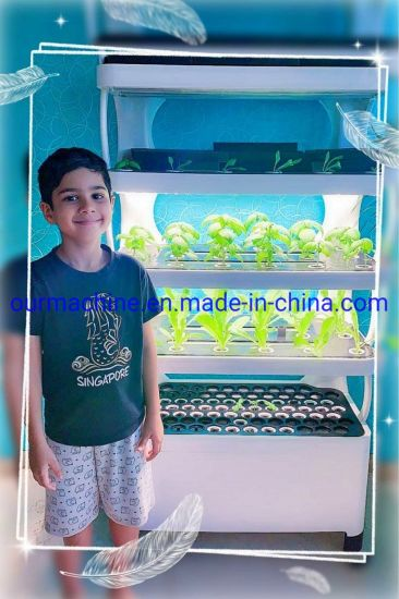 Plant Factory Smart Farming System Tomato Hydroponics Systems Indoor Garden