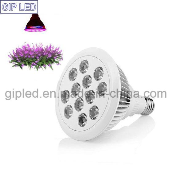 Wholesale Mini LED Grow Light 12W 24W for Bonsai Plant