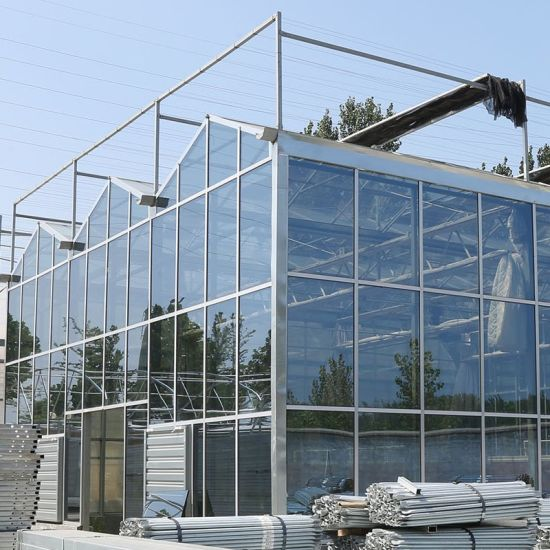 Low Cost Commercial/Agriculture Galvanized Steel Frame Tempered Glass Greenhouse