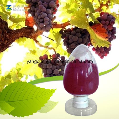 Grape Seed Extract 95% OPC Proanthocyanidins Powder