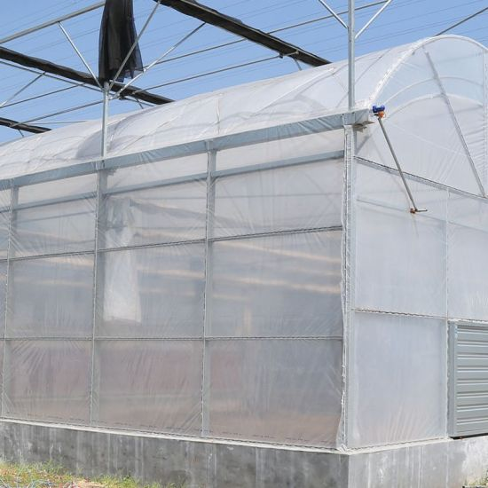 Ornamental Horticulture Sunshine Plastic Green House Greenhouse