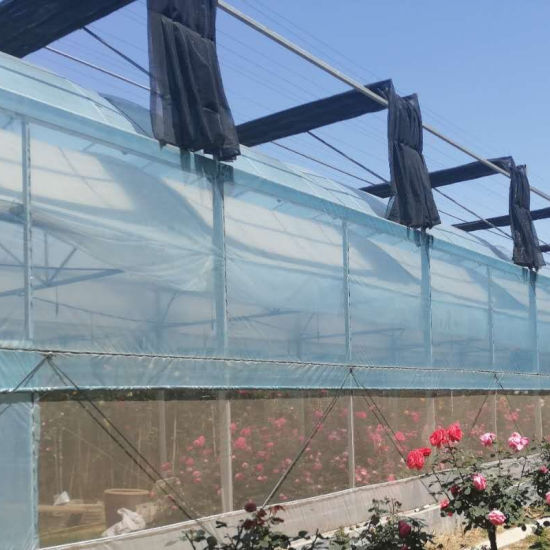 Xinhe Agriculture Intelligent Multispan Film Greenhouse for Planting Vegatable