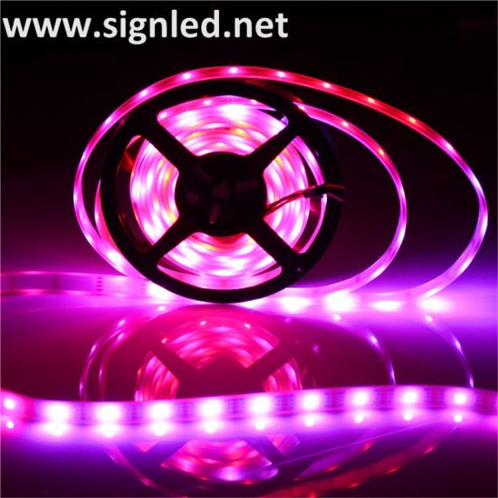 Hot Wholesale Free Sample Cost Led Strip Light Smd5050