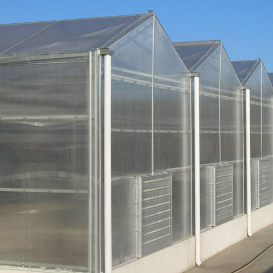 Agriculture Polycarbonate Commercial Rain Gutter Steel Structure Greenhouse with Hydroponic System for Tomato/ Cucumber/ Lettuce/ Pepper Planting