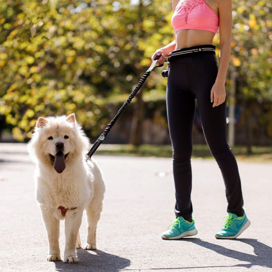 Hands Free Bungee Dog Leash with The Reflective Waist Belt for for Walking & Running with Small, Medium or Large Dogs