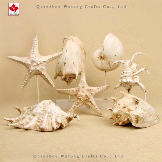 Wholesale Home Party Decor Starfish Shell Souvenir Gifts