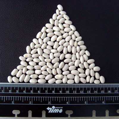 New Crop High Quality White Kidney Bean pictures & photos