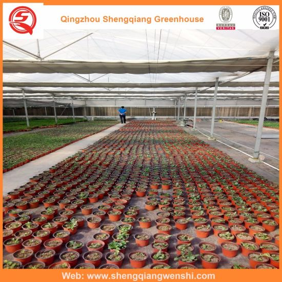 Agriculture/Commercial Polyethylene/Plastic Film Tunnel Greenhouse for Strawberry/Rose