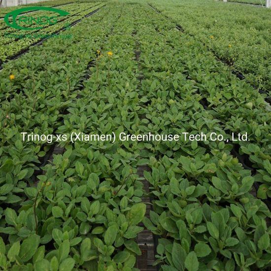 Multi Span Economic hydroponics Glass Greenhouse with energy Saving System