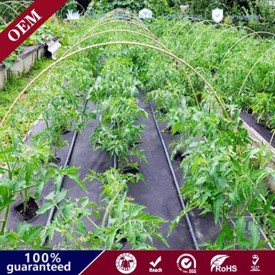 Plastic PP Anti Weed Matting, Weed Proof Matting, Weed Barrier Mat, Anti Weed Cloth, Weed Mat, Ground Cover, Weed Barrier