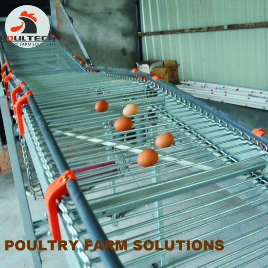 H Frame Layer Chicken Raising Equipment/Battery Chicken Cage