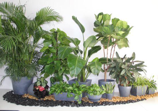 Manufacturer Wholesale Multiple Sizes High Quality Decorative Thick Compression Molding Series Plastic Flower Pot Plant Pot Garden Planter Eco-Friendly Pots
