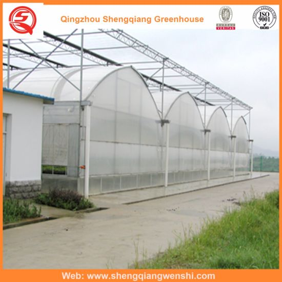 Plastic Film Agriculture Greenhouse for Tomatoes/Flowers