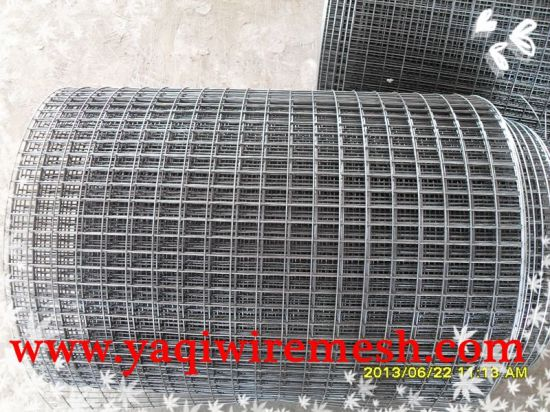 Welded Wire Mesh Factory Supplies Wholesale Sales in Competitive Price