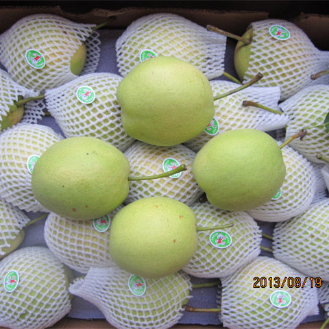 Good Quality Fresh Green Shandong Pear pictures & photos