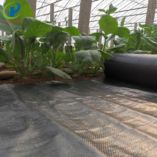 Landscape Fabric Weed Control Fabric Home Depot