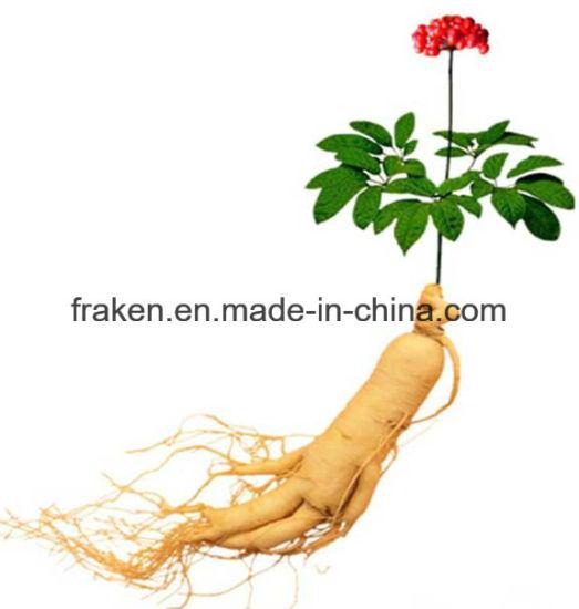 High Quality Ginseng Powder & Ginsenosides & Ginseng Extract