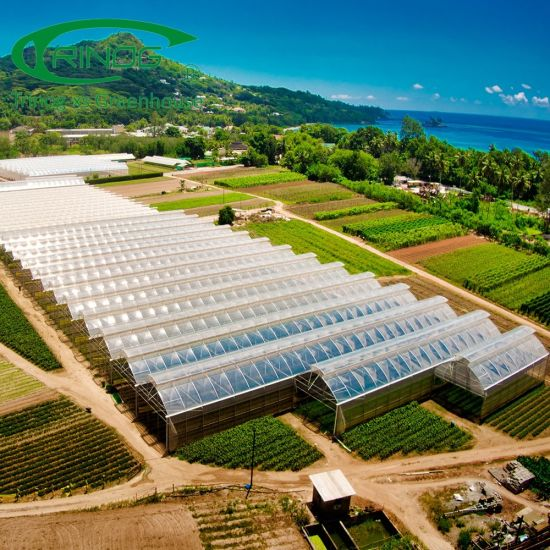 High tech low cost Agricultural used plastic film hydropoinics greenhouses building material for sale