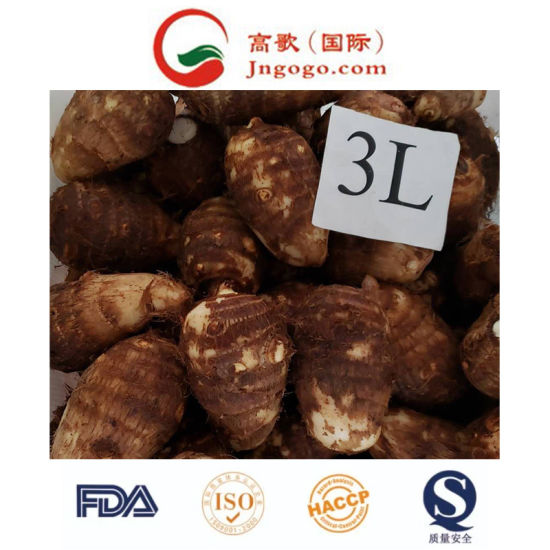 Super Quality China New Crop Fresh Taro Supplier pictures & photos