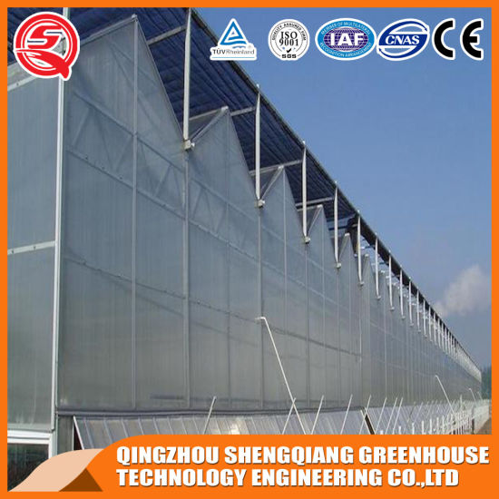 Commercial Stainless Steel Polycarbonate Sheet Greenhouse for Fruit