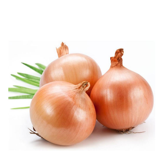 Good Quality Onion Fresh New Yellow Onion for Selling