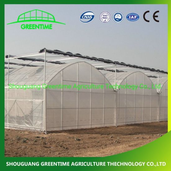 Cheap Multi-Span/Single Span Commercial Tunnel Plastic Film Glass Polycarbonate Farm Agriculture Greenhouse with Seedbed Hydroponic for Tomato Strawberry