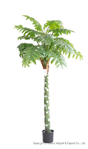Hot Sale Good Quality Indoor Office Decoration Plants