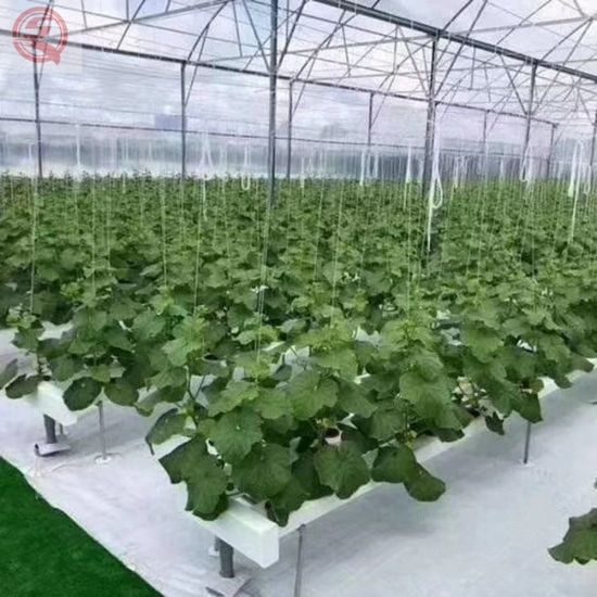 Special Aluminium Alloy Frame Glass Greenhouse for Vegetable/Fruit/Flower