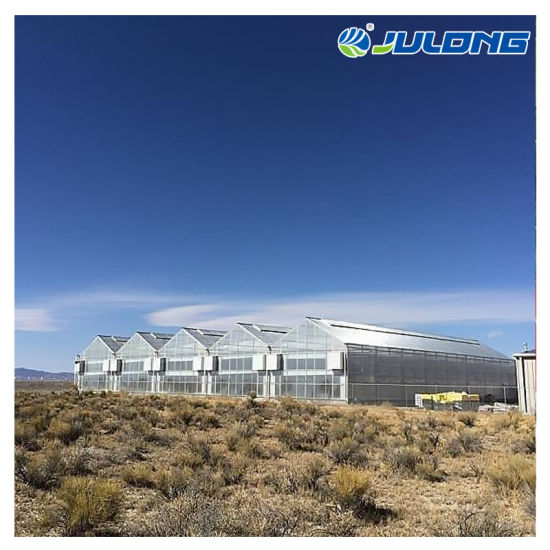 Turn-Key Factory Price High Quality PC Sheet Greenhouse for Vegetable Planting/Tomato with Cooling System